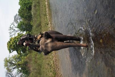Trekking by elephant