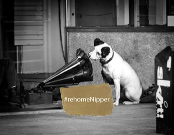 Re-home Nipper & Thousands like him!