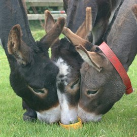 Donkeys in our care