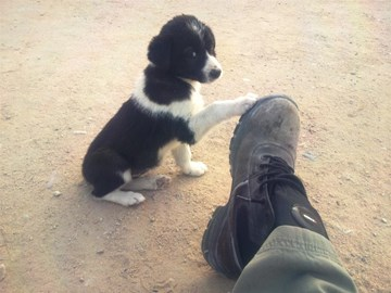 Mav's putting his best foot forward to help little guys like me, please a few pounds would really help woof