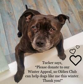 Tucker - rescued by Oldies Club