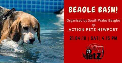 Beagle Bash 2018 @ Action Petz