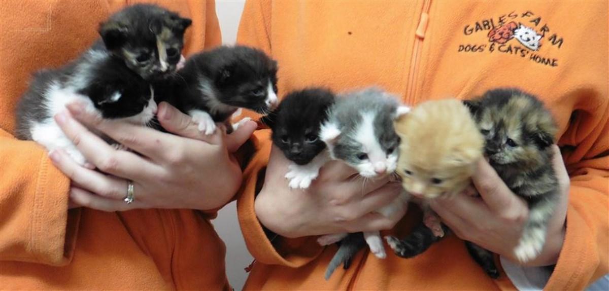 Gables Farm Dogs Cats Home