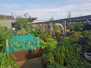 The dig 'n' grow garden