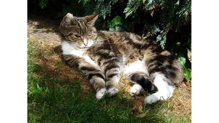 Cats Protection Croydon Kittens