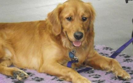Jack-my Canine Partner!