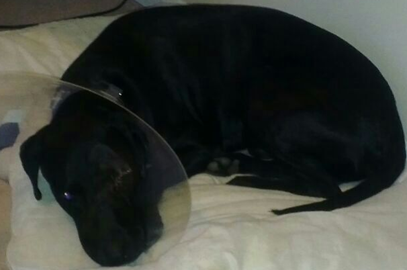 Cancer has no limits, my dog Deuchars lost an eye to cancer last year!
