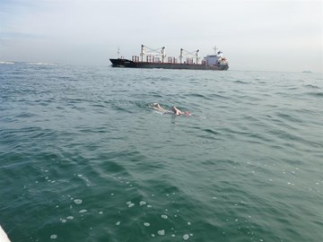 English Channel 8th July 2014