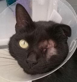 Lola was helped by Nottingham Cats Protection