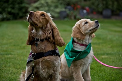 Clara from Wagging Tails makes friend with a Hearing Dog!
