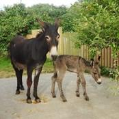 Proud new Mum Sophia and her newborn son.