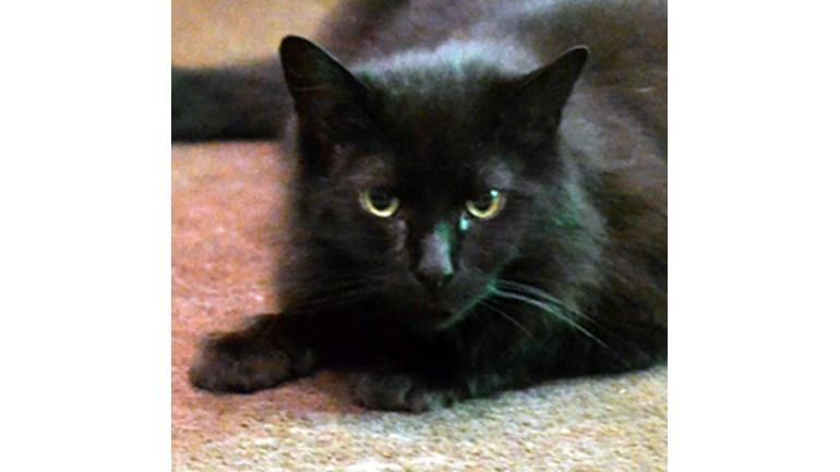 Cats Protection Milton Keynes Facebook