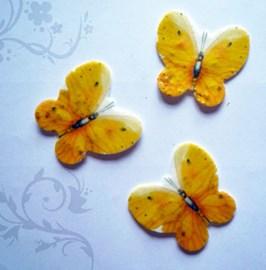 Seeded (Mum's are blue) butterflies<3