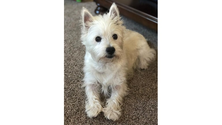 Anna Bassett is fundraising for Westie Rescue Of Missouri Inc