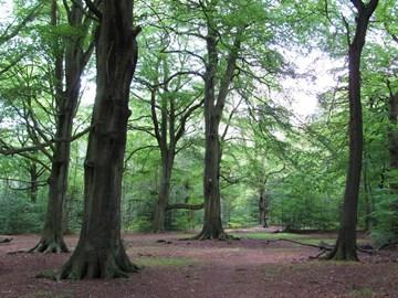 Walk through Ecclesall Woods, Sheffield