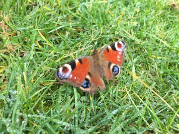 Butterfly spotted on walk remembering Nell