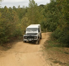 Landy likes forests!