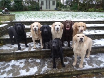 my wonderful 8 labs.who help fundraise