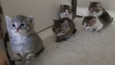 Millie's kittens