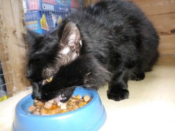 EUREKA! Hamish now eating.