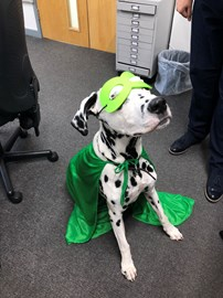 Superhero in training.   Spirits are high in the AFH Payroll office, we have had our first outfit fitting today and we personally think Archie has the potential to be the perfect superhero...providing he can stop stealing the cakes.