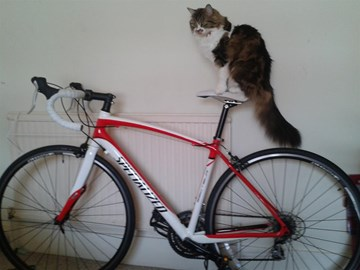 Mishka needs the saddle adjusting