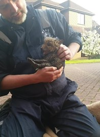 Fox Cub Rescued From a Drain in Cooden Beach