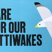 Help us to care for our Kittiwakes.