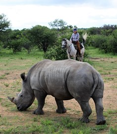 Sophie Neville with a White Rhino