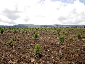 Restoring forest habitat
