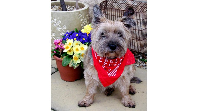 Lynn S Rescue Dogs