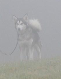 Dog in Fog