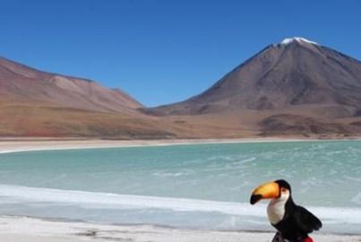 Tito the Toucan in Bolivia