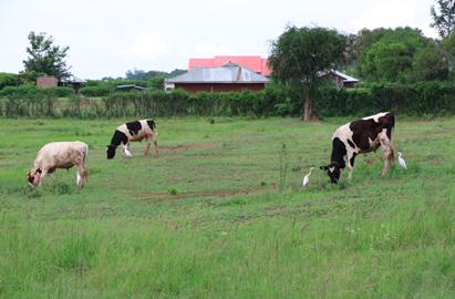 2015_Farm Land