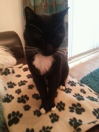 Ted (CHAT rescue no1)