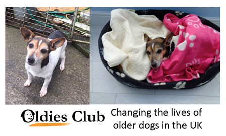 Oldies Club - changing the lives of older dogs