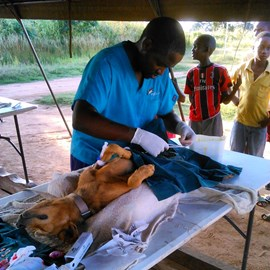 Dr Tino operating at mobile clinic