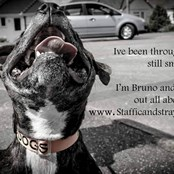 Bruno is one of our long term foster dogs! He has now been adopted by one of our amazing volunteers!