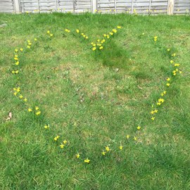 Saw this on Thursday during my daily walk! Daffodils arranged as a heart.