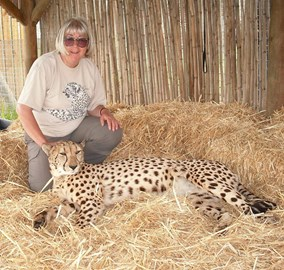 Working hard to keep big cats contented....
