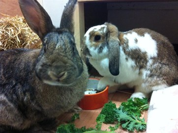My bunnies, Neil and Nora!!