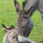 Lottie was pregnant when she arrived at our sanctuary  with her beautiful foal, Olly.