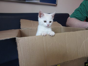 A kitten we gave a good start with vaccinations, worming and flea treatment.