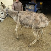 We rescue and care for donkeys from situations of abuse, neglect and abandonment.