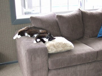 All cats should have a couch to themselves! My Bella :-)