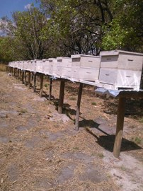 Hives at Itumba Hill Singida