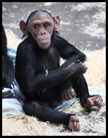 My Sponsored Monkey