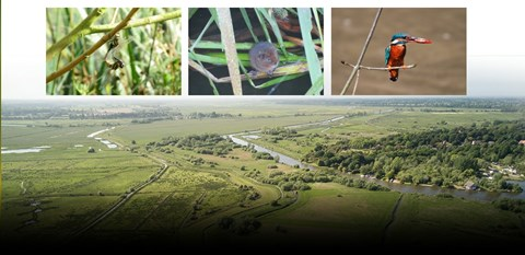 (c) Suffolk Wildlife Trust An aerial view of the site and species that could return