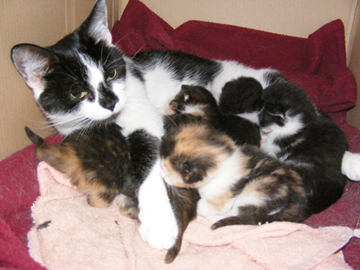 Baba and The Kittens - August 2007 (two were rehomed, three were kept - it was like something out of Sophie's Choice!)