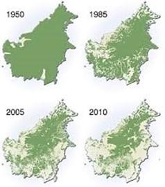 Rainforest decline in Borneo